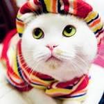 «Кошачий» паразит угрожает здоровью людей