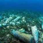 Антропогенный мусор дошел до океанских глубин